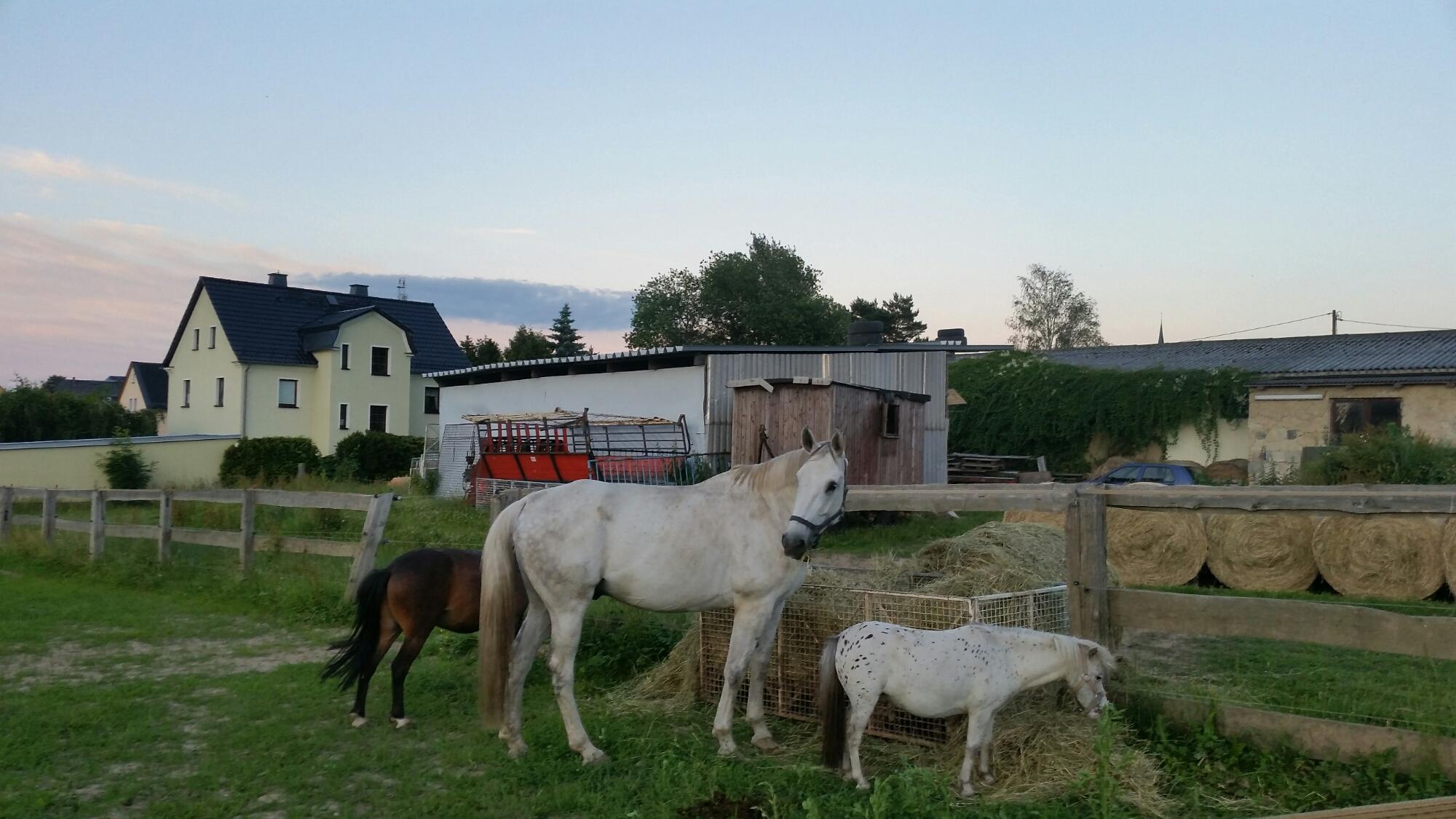 Ausflugsaufnahme Limbach-Oberfrohna Pferde Foto