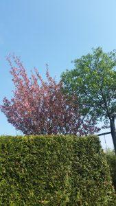 Interessante Hecke mit Bäumen